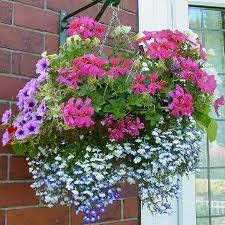 hangingbaskets
