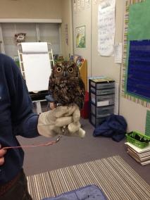 Owl presentation in grade 2 classes