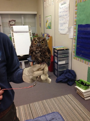 Owl presentation in grade 2 classes