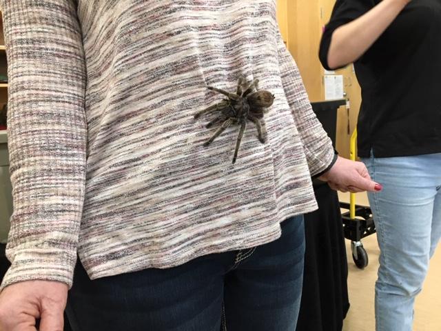 img_0032 spider